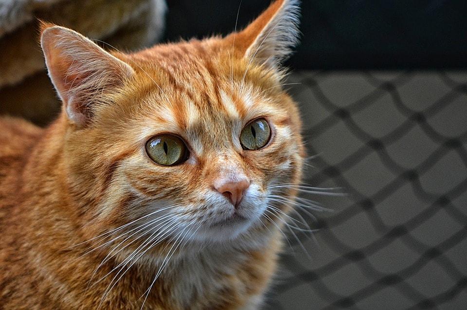 De politie heeft de identiteit vastgesteld van de betrokkene die in #Mijdrecht een kat in de sloot gooit..