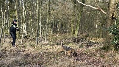Agent doorzoekt met hond bosgebied