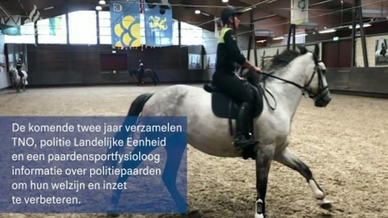 Het politiepaard: fit, dapper en duurzaam inzetbaar