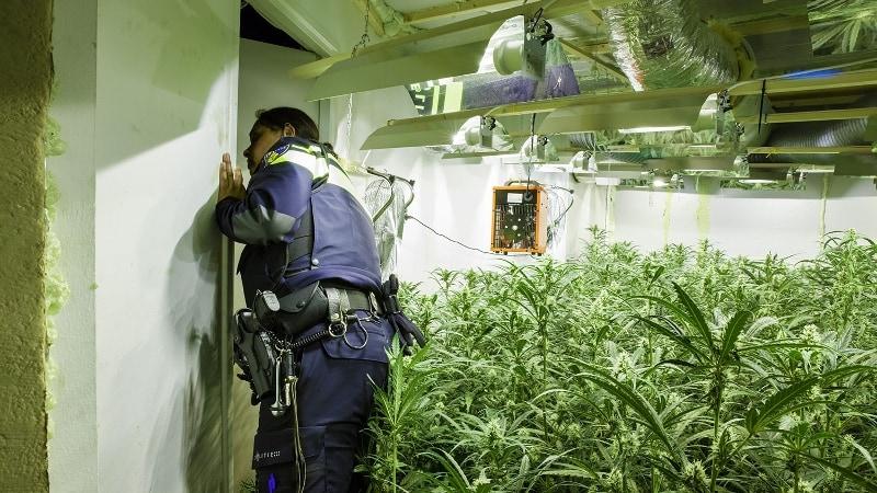 Agent inspecteert illegale hennepplantage in woning